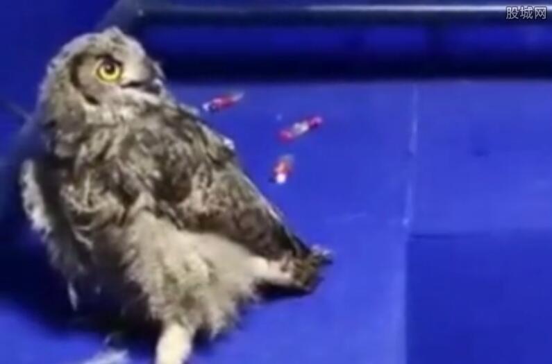 当街叫卖保护动物 国家二级保护动物猫头鹰被贩卖