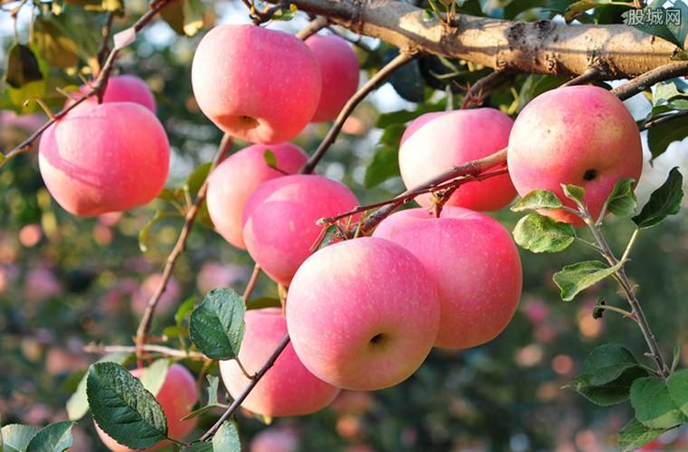 苹果价格涨幅极高