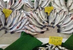 鱼价回暖上涨 鲈鱼和鳜鱼半年涨价近一倍
