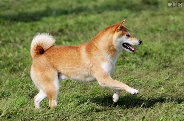 武汉养犬规定政策