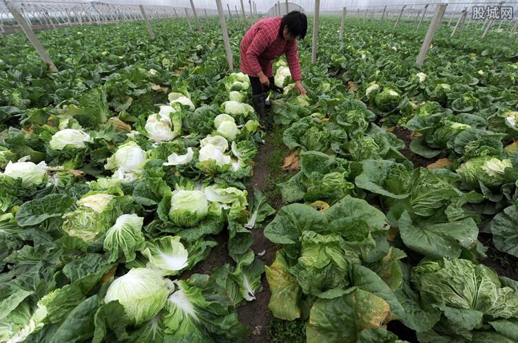 菠菜含有兴奋剂