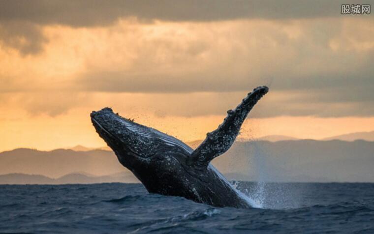 启动商业捕鲸前景怎样