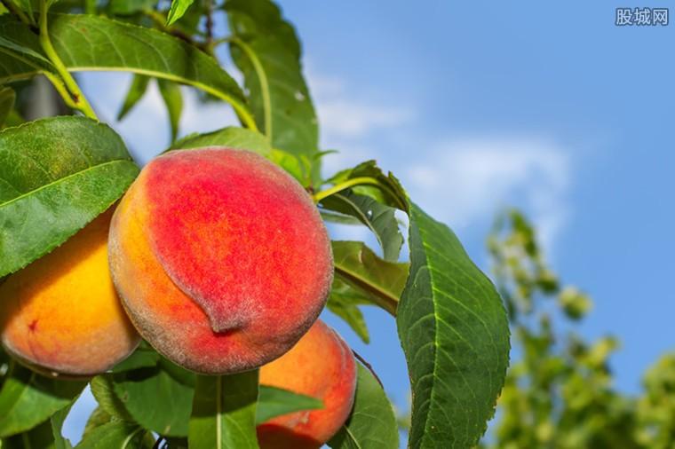 女副市长开直播卖桃 2个多小时卖出100吨桃子