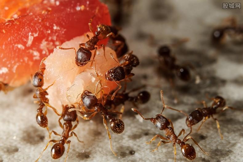 宠物蚂蚁怎么样