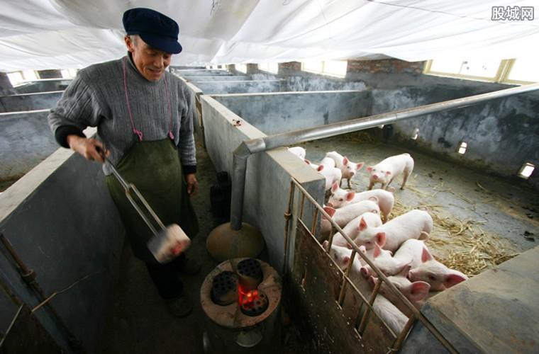 7月生猪出栏量下滑 预计未来猪价将持续走高