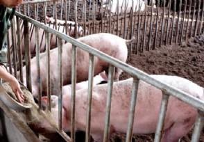 猪肉价猛涨五部委出手 未来猪肉价还有上涨空间?