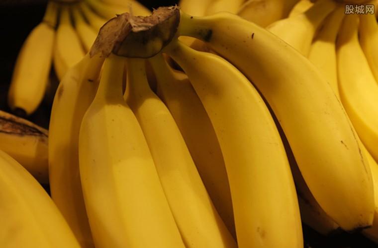 香蕉在2050年将全面消失