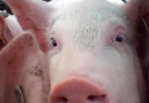 北京望京配资公司猪肉涨价主要原因 多种因素导致猪肉上涨