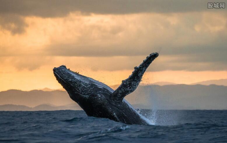 日本鲸鱼价格