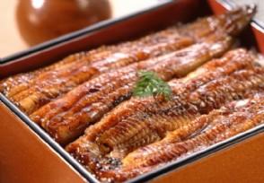 日本鳗遇严重鱼荒 2018鳗鱼价格是多少钱一斤