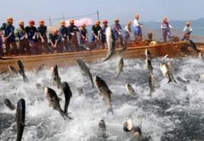 长江已到无鱼等级 渔民曾一天能挣近千元