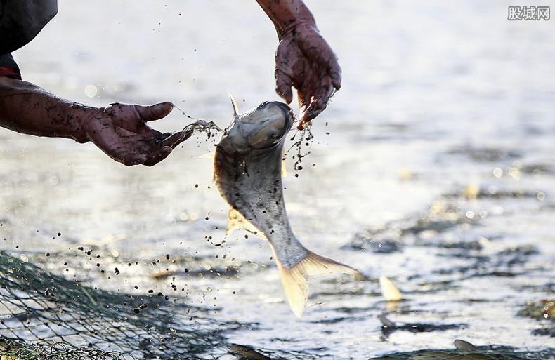 长江十年禁渔