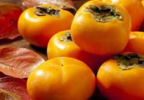 两柿子70万日元 天价柿子你想要尝尝吗?