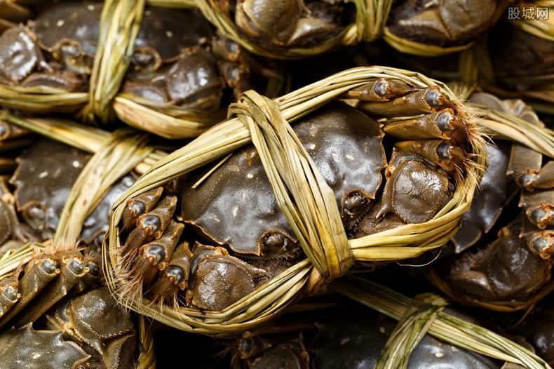 日本螃蟹500万 五百万一只螃蟹破世界最高价