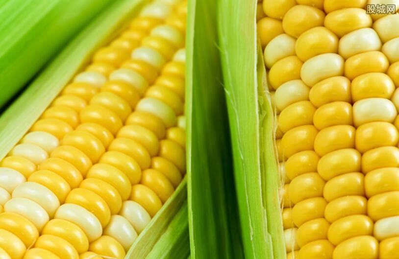 玉米近期均价开始走高