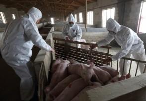 云南腾冲非洲猪瘟 云南非洲猪瘟补助标准