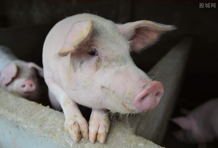 生猪价格最新走势 12月6日生猪价格上涨