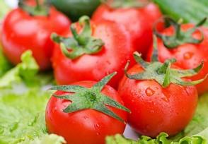 西红柿多少钱一斤 市场最新价格数据