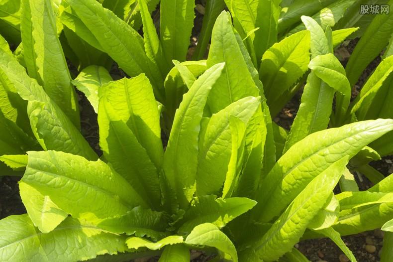 微型蔬菜种植简单