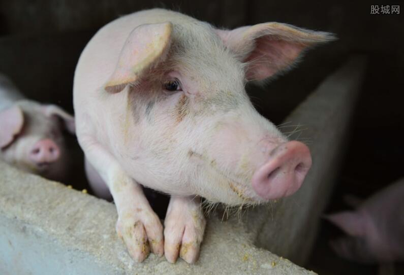 广东生猪价格多少