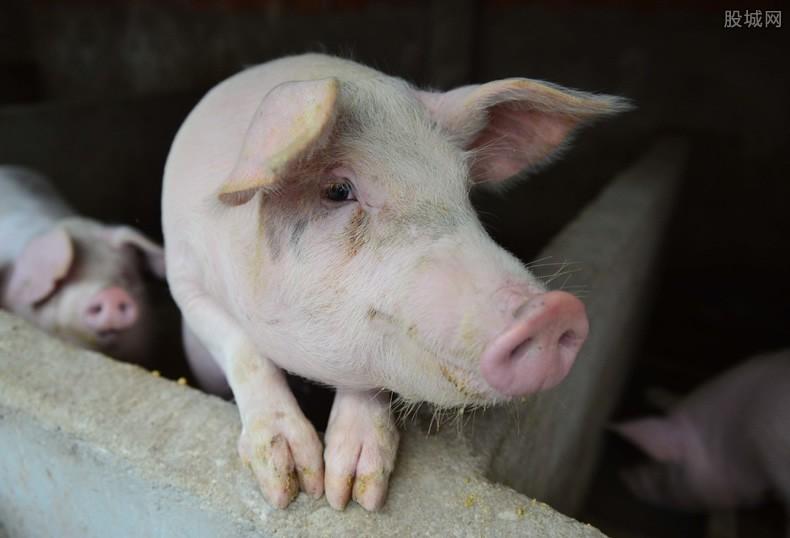 1月份全国生猪生产稳步恢复 生猪最新消息公布