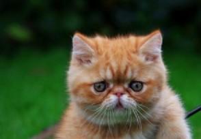 2020年橘猫多少钱一只 马上带你去了解!