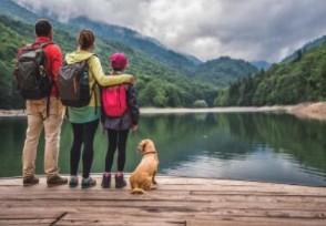 19年国内旅游人数 比上年同期增长8.4%