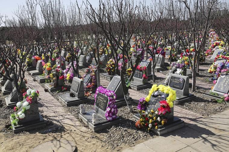 公司违规建设墓地被拆