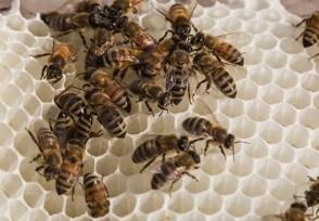 正宗1斤蜂蜜多少钱 来看看2020蜂蜜市场价
