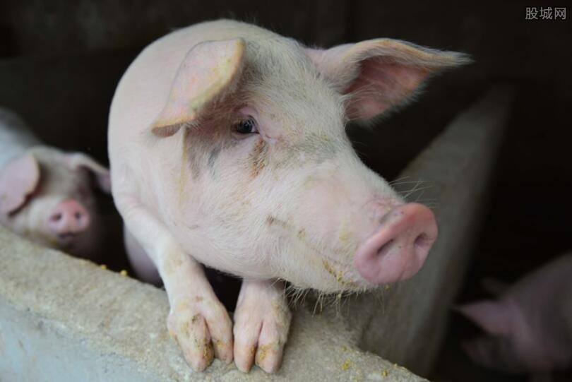 生猪多少钱一斤