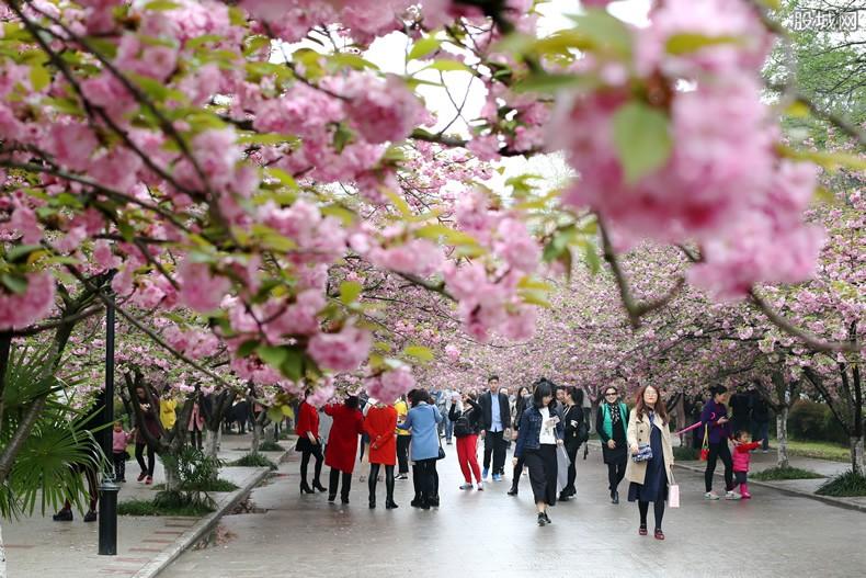 玉渊潭公园赏樱