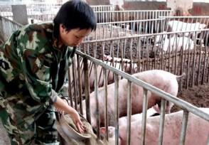 猪价或趋势性下降 4月13日生猪多少钱一斤