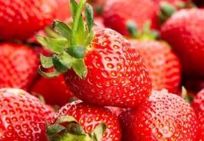 草莓多少钱一斤 2020年最新价格走势