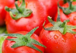 西红柿多少钱一斤 2020价格行情分析