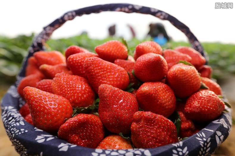草莓价格行情