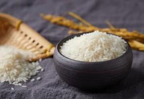 2020年大米价格走势目前多少钱一斤?