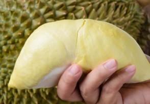 金枕榴莲多少钱一斤 与猫山王榴莲有什么区别