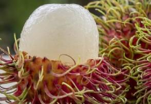 商贩用工业稀硫酸泡水果 将红毛丹保鲜期延长至7日