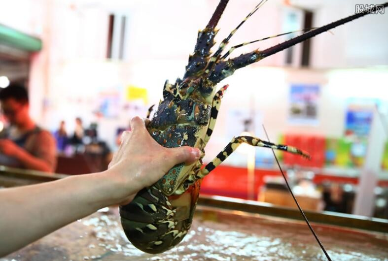 澳洲龙虾营养价值
