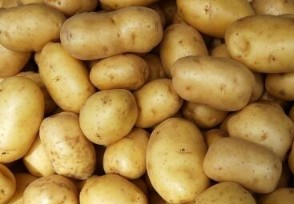 一斤土豆进价1.3元卖6元 商贩拟处罚10万余元