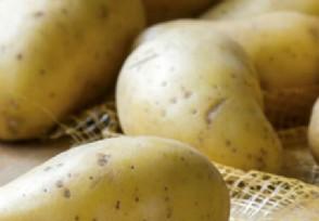 北京商户把1斤土豆卖到6元 市监局对其罚款10万元