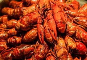 中国人造小龙虾 什么时候上市价格贵吗