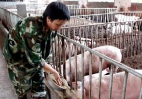 生猪价格多少钱一斤广东今日猪价行情介绍