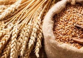 7月份小麦还会涨价吗现在小麦多少钱一斤