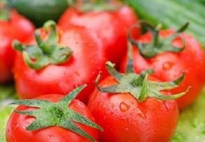 西红柿多少钱一斤买回来可以放冰箱吗