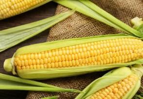 中储粮回应储备玉米存质量问题今年价格走势如何?