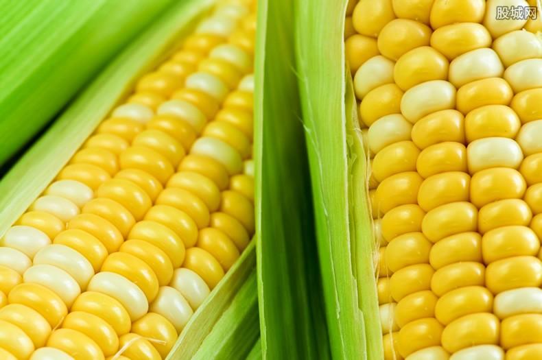 储备玉米如何