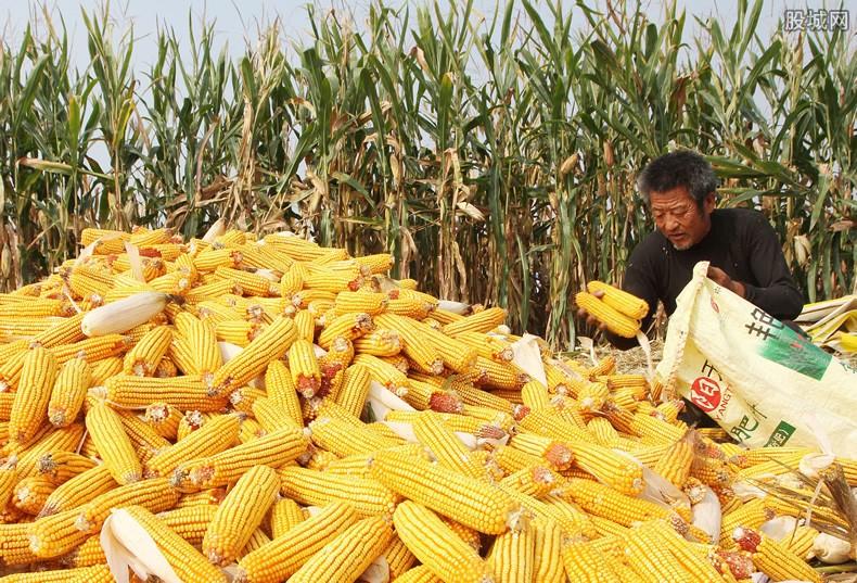 玉米价格走势