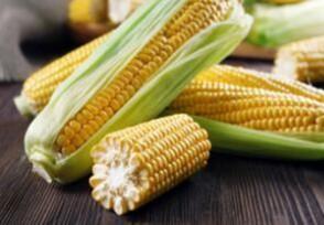 玉米价格持续上涨7月下旬还会继续涨价吗?