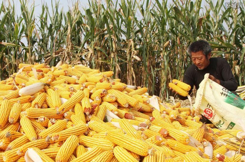 网曝储备玉米存质量问题